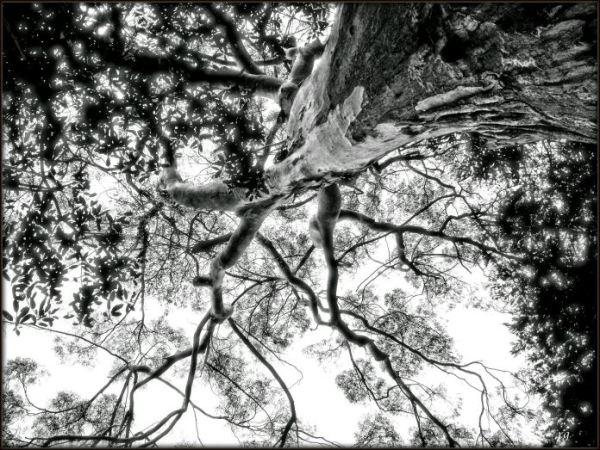 The Tree-10