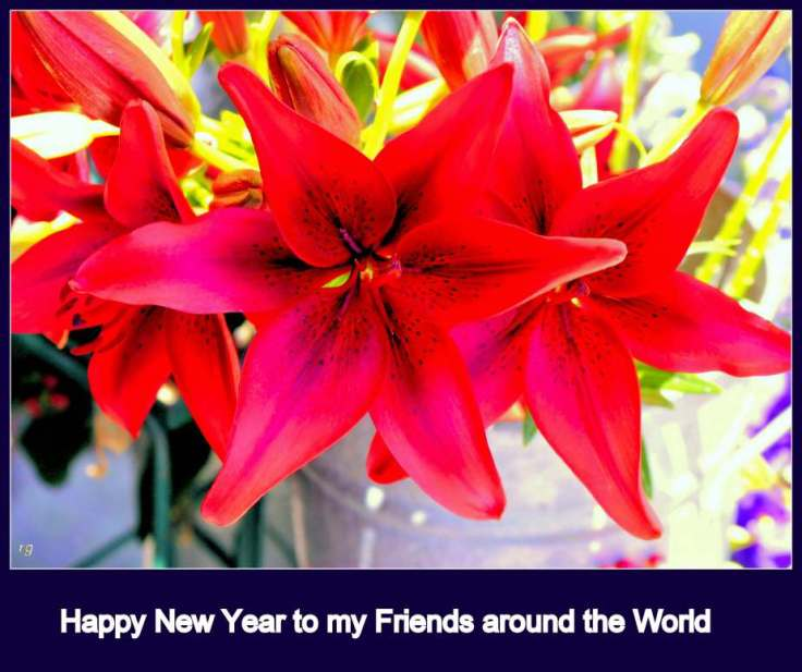 Photograph of brightly lit and highly saturated red lilies with the caption Happy New Year to my Friends around the World