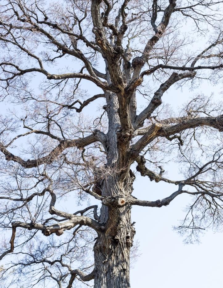 tree-mendos