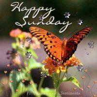 Happy Sunday 1