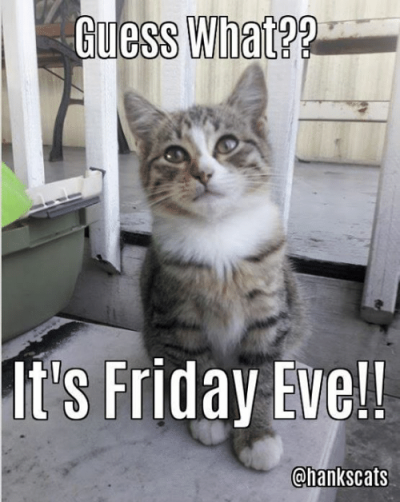uess-what-its-friday-eve-chankscats-happy-friday-eve-guys-17457852
