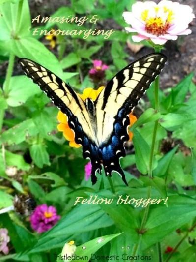 A-garden-visitor