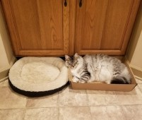 Cardboard box or cat bed