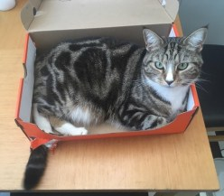 """""""My cat scratched a tail hole into her box."""""""