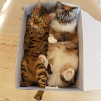 If I fits, I sits (except for a foot)