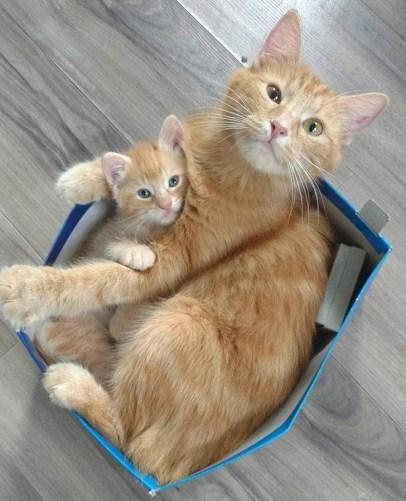 Son's first box lesson