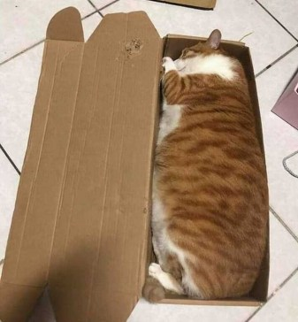 """The laws of physics say, """"The box should be fully filled with a cat."""""""
