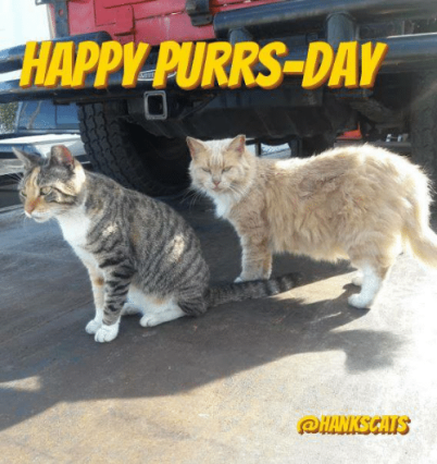 pilpurrs-day-happy-friday-eve-lovely-friends-we-_3-you-6662413