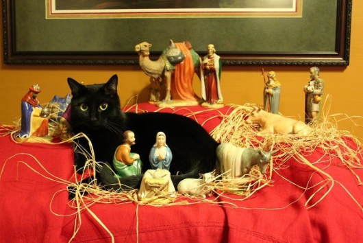 Cats That Took Over Nativity Scenes So They Can Be The Center Of Attention