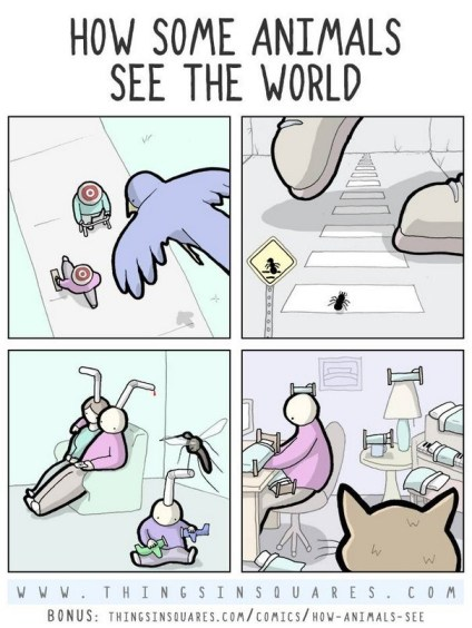 How Some Animals See The World