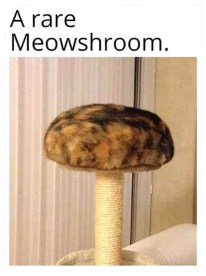 stool rare meowshroom