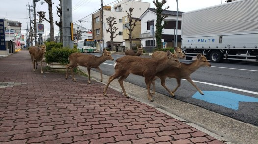 Wildlife Animals Are Roaming The Streets During Coronavirus Quarantine