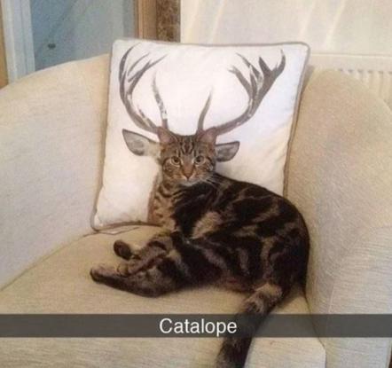 catalope